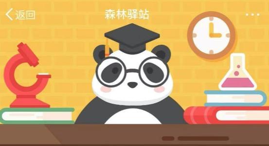大熊猫生活习性是什么样的? 分散独居 群居 雄性独居